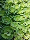 Аквариумное растени стоковое фото