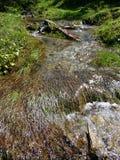 Аквариумные растениа в потоке Стоковое Изображение RF