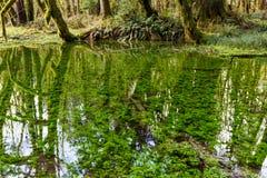 Аквариумные растениа Стоковое фото RF