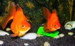 аквариум его жителя свои стоковые изображения rf