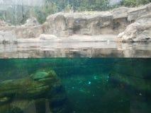 Аквариум или приложение с окном и водой и камнем на зоопарке стоковое изображение