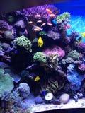 Аквариум Калифорния залива Монтерей Стоковое Изображение