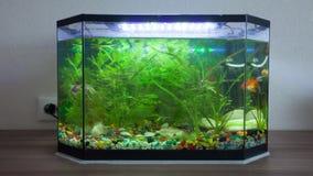Аквариум дома с рыбами акции видеоматериалы