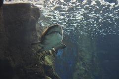 Аквариум от ираклиона в острове Крита Греции стоковое фото rf