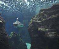 Аквариум от ираклиона в острове Крита Греции стоковые фото
