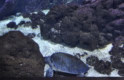 Аквариум от ираклиона в острове Крита Греции стоковое изображение rf