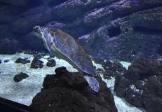 Аквариум от ираклиона в острове Крита Греции стоковое изображение