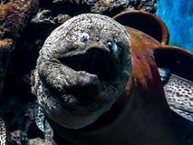 Аквариум Пхукета Yaman Mutart стоковое фото