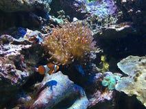 Аквариум рифа Стоковые Изображения RF