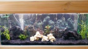 Аквариум, рыба Стоковые Фотографии RF