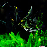 Аквариум рыб Стоковая Фотография RF