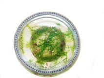 Аквариум садка для рыбы стоковое изображение