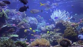 Аквариум, садок для рыбы, морские животные видеоматериал
