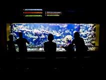 аквариум смотря людей Стоковая Фотография RF