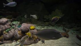 Аквариум с морской флорой и фауной видеоматериал