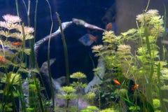 Аквариум с рыбами и водорослями стоковое фото