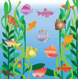 аквариум удит пестрый малый swim Стоковое Изображение RF