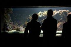 аквариум 04 Стоковое фото RF