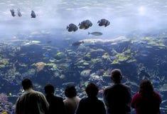 аквариум Стоковая Фотография RF