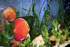 аквариум Стоковая Фотография