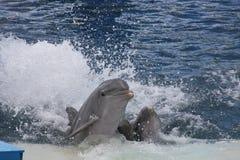 аквариум 3 Стоковые Фотографии RF
