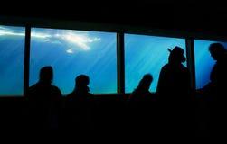 аквариум Стоковые Фотографии RF