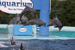 аквариум 6 Стоковые Фотографии RF