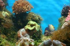 аквариум Стоковое Изображение