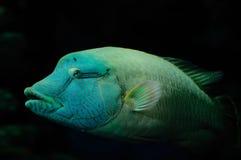 акватическая жизнь Стоковое Изображение