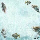 акватическая предпосылка удит жизнь тропическую Стоковые Изображения RF