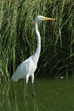 акватическая птица стоковые фото