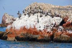 Акватические птицы стоковое изображение rf