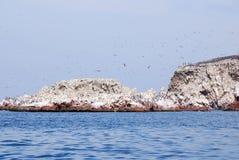 Акватические птицы стоковое фото rf