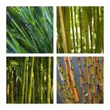 акватические bamboo заводы Стоковое фото RF