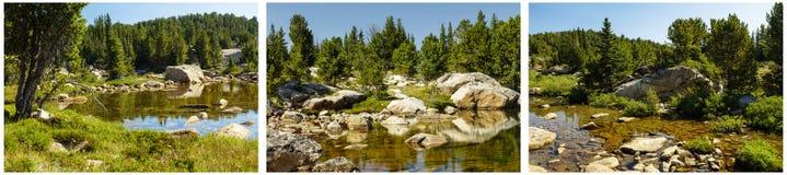Акватический коллаж бассейна осоки воды пруда горы Стоковые Фото