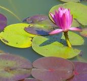 акватическое спокойствие brooklyn Стоковое фото RF