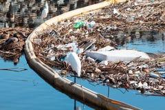 Аккумулированная погань подметенная к океану после дождливого дня в птичьем заповеднике Bolsa Chica, Калифорнии Unsightly и токси Стоковое Фото
