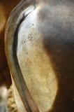 Аккуратная кожа Стоковое Фото