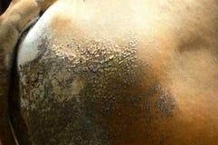 Аккуратная кожа Стоковые Изображения RF