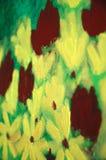 акриловые яркие цветки холстины Стоковое Изображение RF