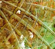 Акриловый лить Брайн и зеленая предпосылка Стоковое Фото