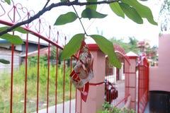Аксессуары цветка Стоковые Изображения RF