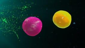 Активируя T-лимфоциты и клетки b бесплатная иллюстрация