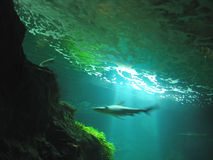 акула быстрого движения Стоковые Фотографии RF