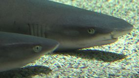 Акула на морском дне акции видеоматериалы