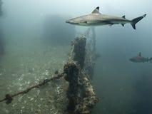 акула палубы стоковое изображение rf