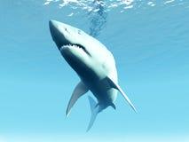 акула под водой Стоковое Изображение