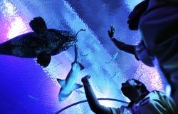 акула Стоковые Фото