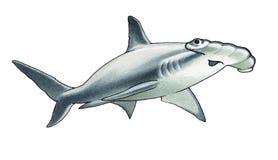 акула hammerhead иллюстрация вектора