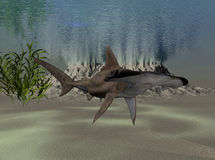 акула hammerhead Стоковая Фотография RF